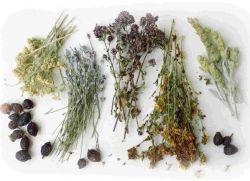 odmiedniczkowe zapalenie nerek leczenie ziołami