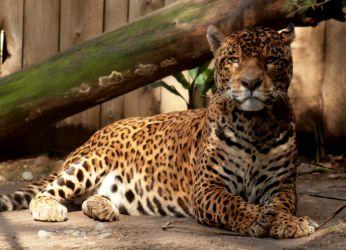 Зоопарк в Кильпуэ