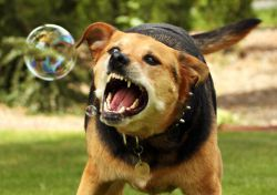 беснило код паса симптоме1
