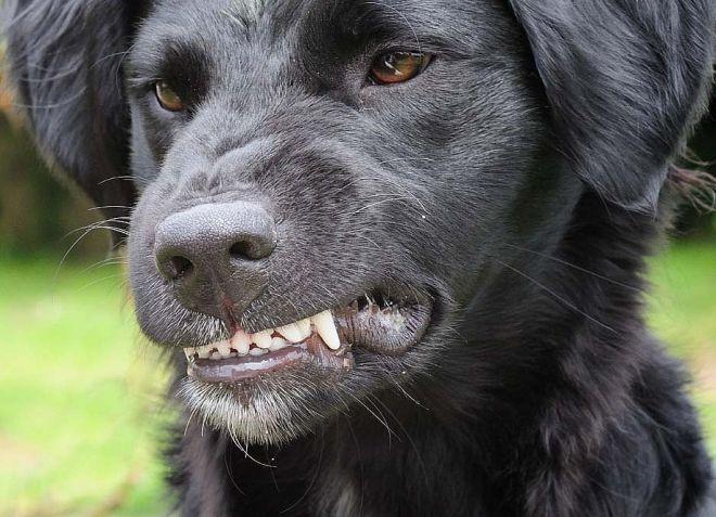 как собака может заразиться бешенством