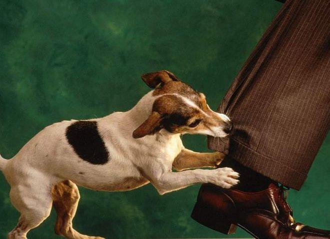 лечится ли бешенство у собак