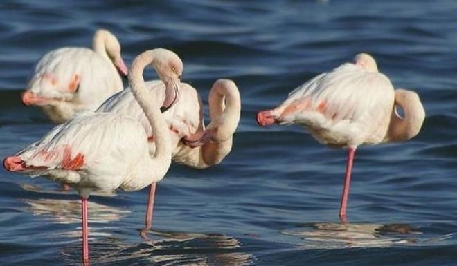 Фламинго - визитная карточка заповедника