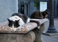 Кошки на кладбище