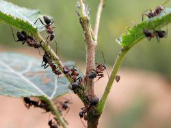 najlepszy lek na mrówki