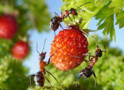 Rozwiązanie przeciw mrówkom
