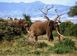 Слоны в парке Маньяра