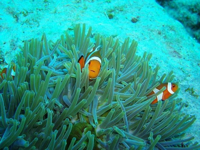 Острова Керама - лучшее место для дайвинга