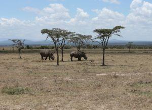 Отличное сафари в Найроби
