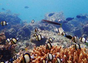 Коралловые рифы Ватаму