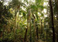 Природная зона Саванна