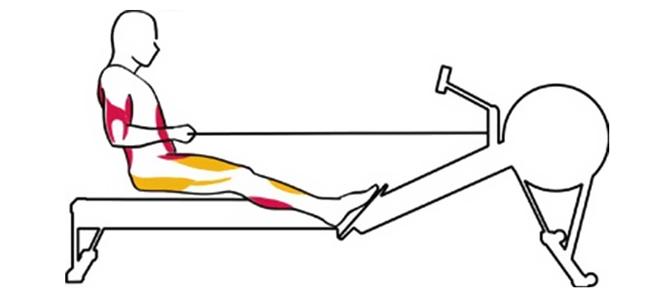 Usposabljanje na veslaškem stroju