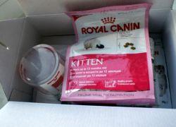 Канин краљевска сува храна за мачке1