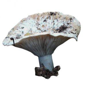 Pravila za prikupljanje gljiva za djecu 6