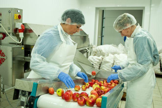 На заводе по производству сидра