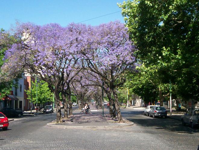 Цветущая улица в Санта-Фе