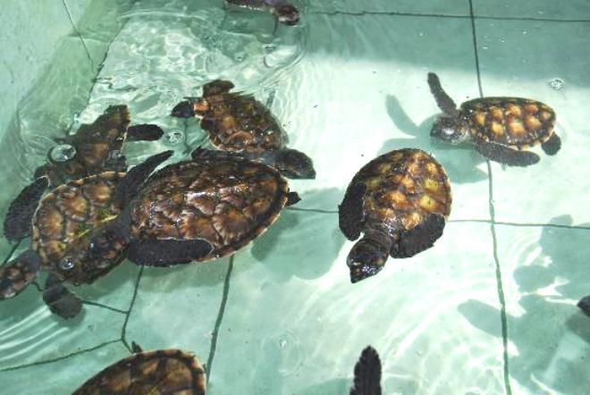 Черепахи в вольере