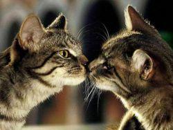 Сексуална бариера за котки1