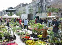Воскресный рынок цветов на площади Коутер