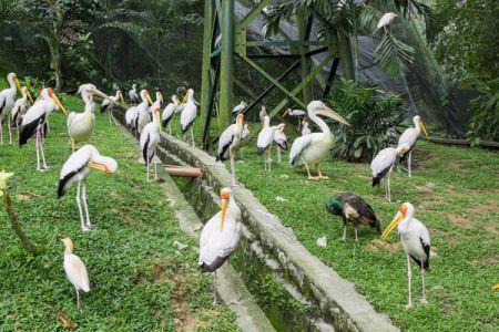 Знаменитости Куала Лумпура5