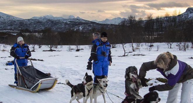 Катание на собачьих упряжках (Villmarkssenter) в Сортланне