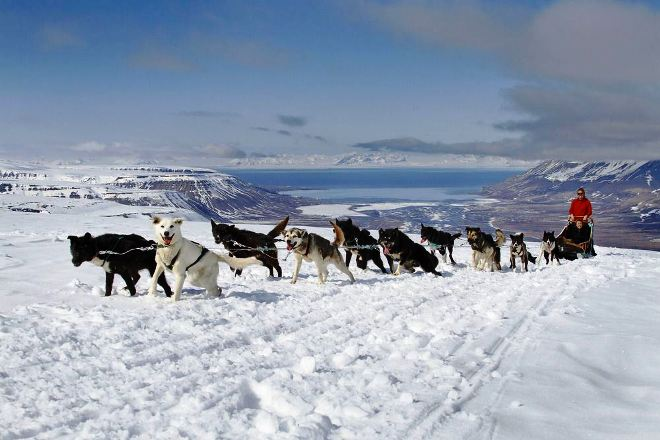 Езда на собачьих упряжках