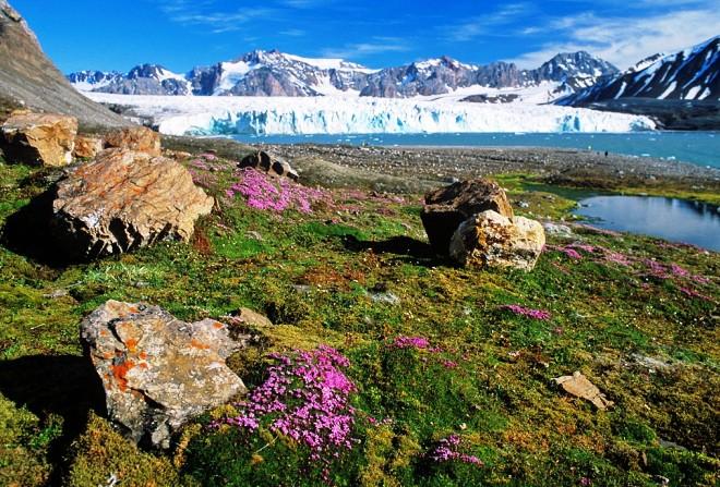 Природа на острове