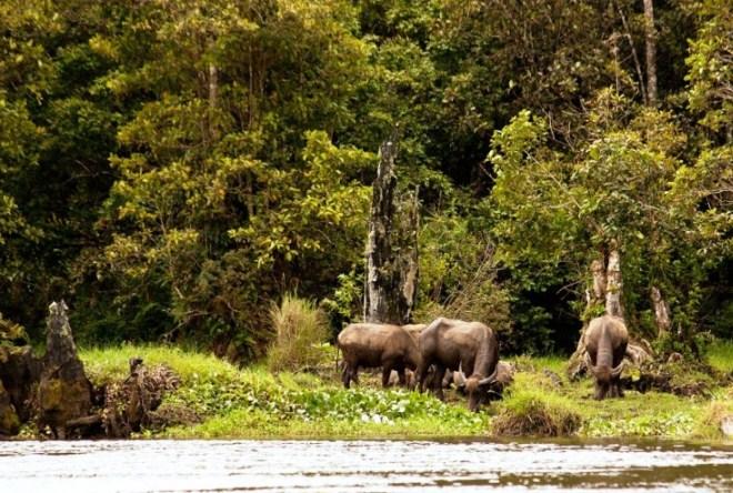 Национальный парк Гунунг-Лесер