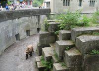 Медвежья яма