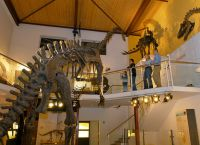 Музей динозавров Saurier Museum в Цюрихе