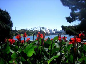 Уголок природы в Сиднее