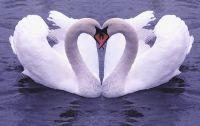 feng shui ljubavni simboli 3