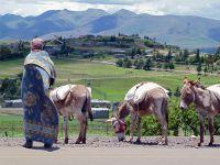 Пони на улицах Таба-Цека