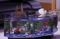 Akwarium stołowe 7