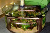 Akwarium stołowe 9