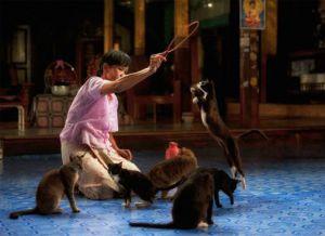 Шоу прыгающих кошек