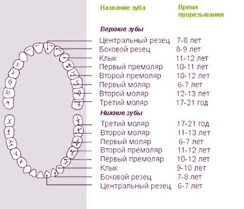 трајно време зацења зуба