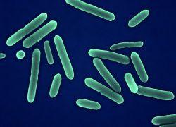 tetanus patogena