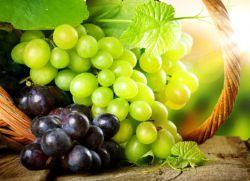 najlepsze winogrona stołowe