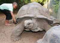 Черепахи здесь по-настоящему большие