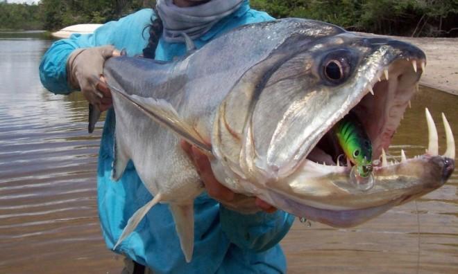 Рыбы Колумбии