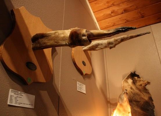 В музее представлены члены людей, животных, эльфов и троллей