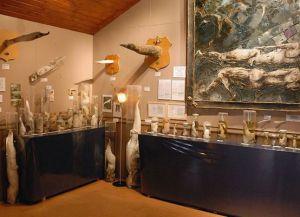 Обширная коллекция в Фаллологическом музее