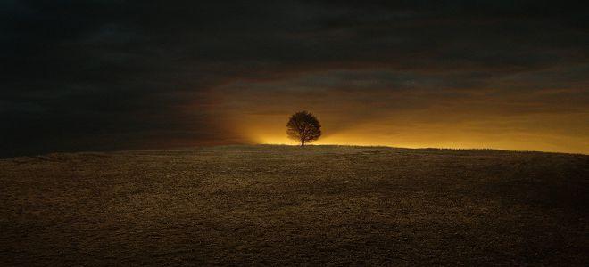 stablo života