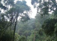 Величественные леса заповедника