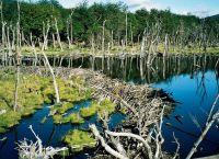 Необычная растительность Национального парка Огненная Земля
