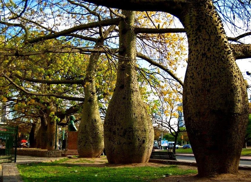 Деревья Тоборочи