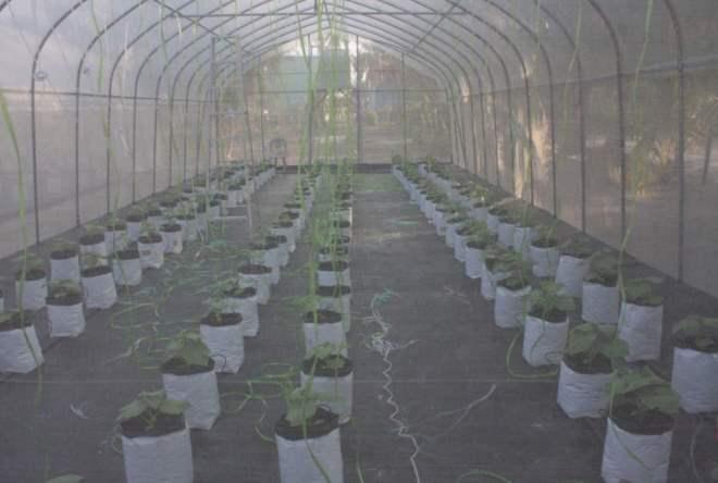 Гидрофобная ферма