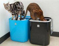 tace dla kotów ModCat2