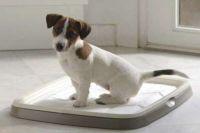 tacka dla psów małych ras3