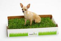 tacka dla psów z trawą1